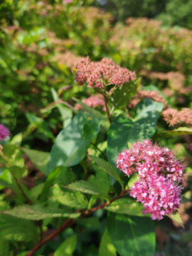 xiaomi mi 8 kvetina detail