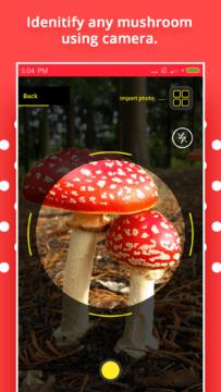 Mushroom Identification 1