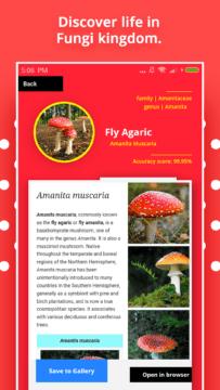 Mushroom Identification 2