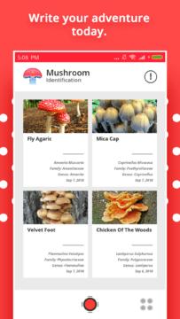Mushroom Identification 3