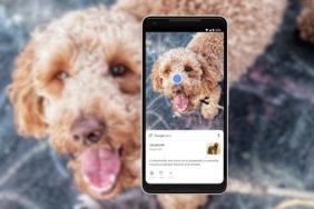Rozeznání objektu (pes) bez vyfocení