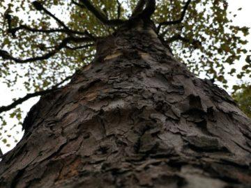 Huawei Mate 20 Pro fotografie strom