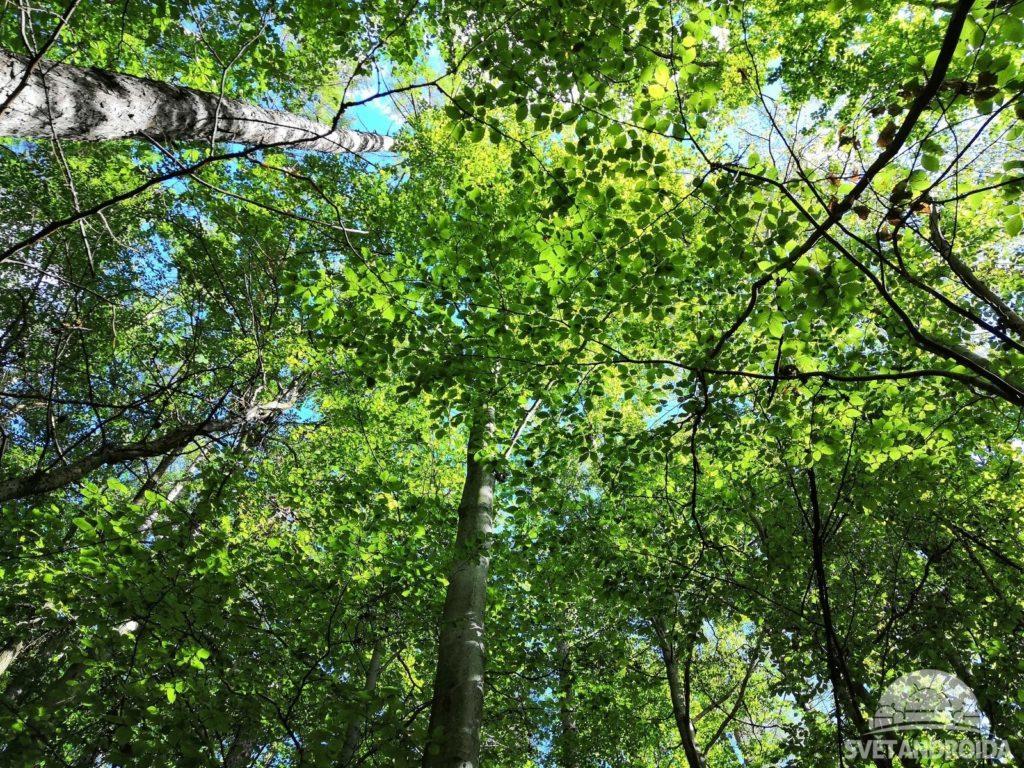 Huawei Nova 3 fotografie stromy
