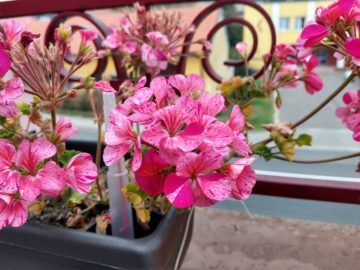 Motorola Moto Z3 Play foto kvetina