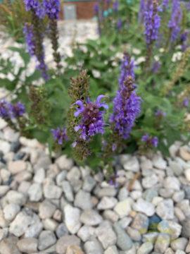 Recenze-iPhone XS-fotografie-kvetina