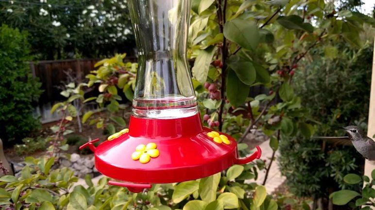 Hummingbird: Slow Motion Nexus 6P
