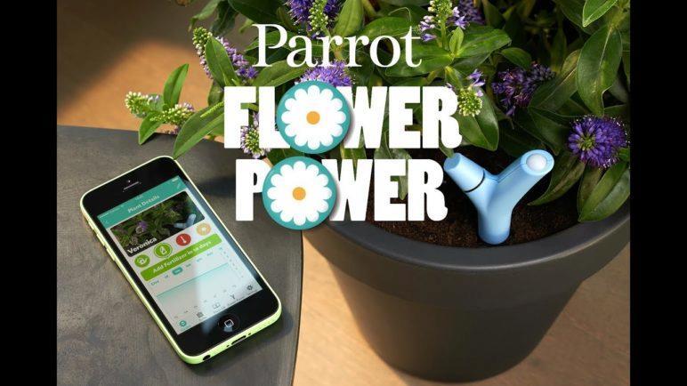 Introducing Parrot Flower Power