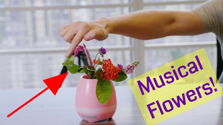 Musical Flower Pot  - A Crazy and Fun Plant Pot Piano