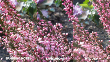 Srovnání fotoaparátů Samsung Galaxy A9 vs Samsung Galaxy Note 9 vs HTC U12+ makro detail