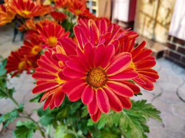 Xiaomi Mi 8 Lite fotografie makro kvetina