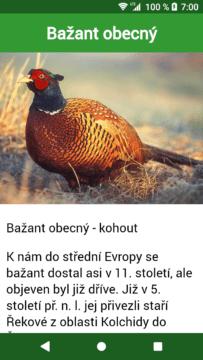 Hlasy ptáků android