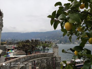 Xiaomi Mi 9 fotografie citrus