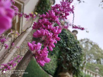 Xiaomi Mi 9 fotografie kvetina