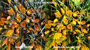 Fototest Huawei P30 Pro vs Samsung Galaxy S10 Plus květiny