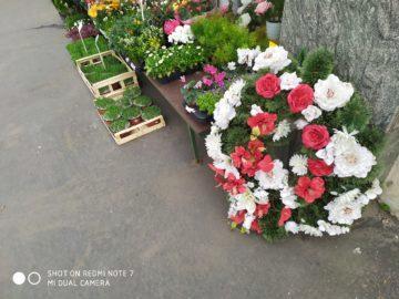 Xiaomi Redmi Note 7 fotografie kvetiny hrbitov