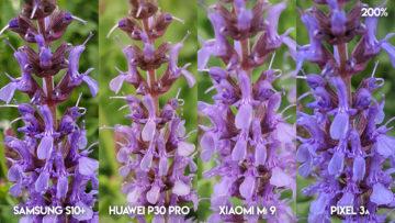 Fototest S10 vs P30 Pro vs Mi 9 vs Pixel 3A detail květiny