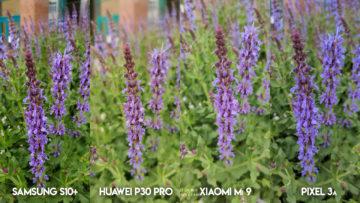 Fototest S10 vs P30 Pro vs Mi 9 vs Pixel 3A květina