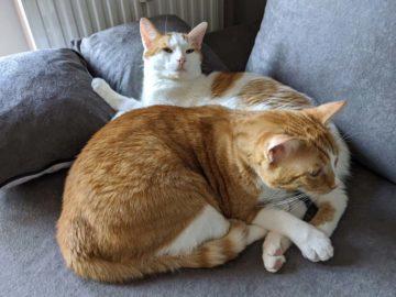 fotografie kočky pixel 4