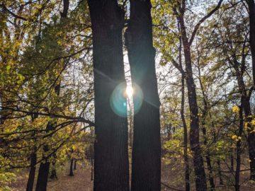 fotografie stromů