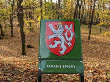 google pixel památné stromy česko