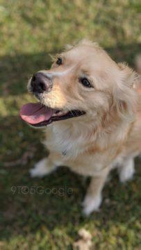 pixel 4 fotografie psa