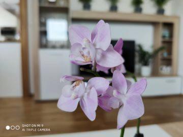 Xiaomi Mi 9 foto 1