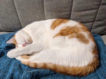 kočka foto test Pixel 4