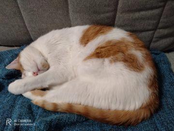 kočka foto test Realme 5