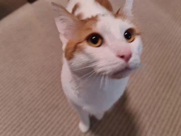 foto test Samsung Galaxy S20 Ultra kočka 4