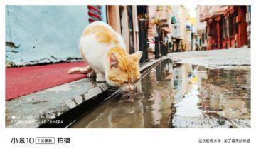 jak fotí Xiaomi Mi 10 kočka 1