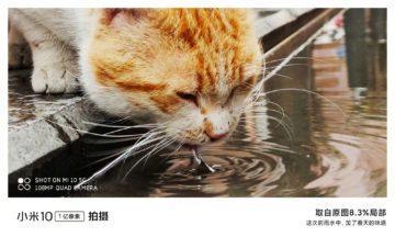 jak fotí Xiaomi Mi 10 kočka 2