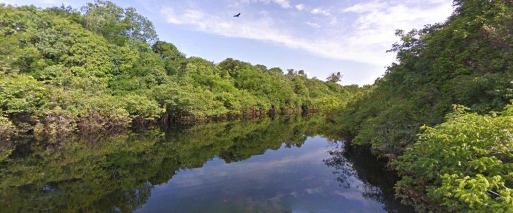 Street View Rio Negro Amazonie