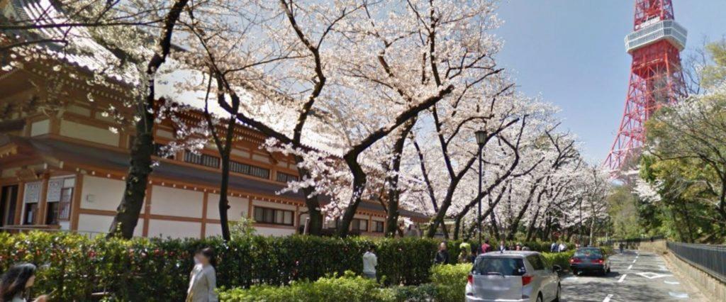 Street View třešňová alej Tokio