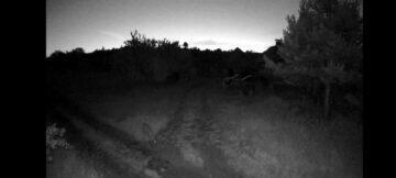 záznam zvíře noc