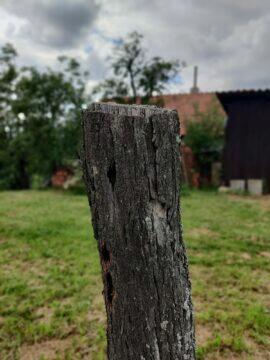 OnePlus Nord bokeh pařez