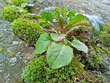 Realme 7i foto makro rostlina