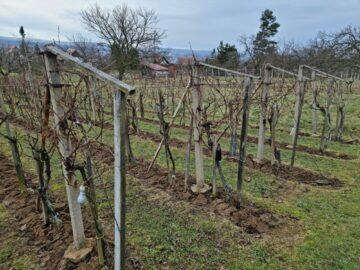 S21 108mpx víno