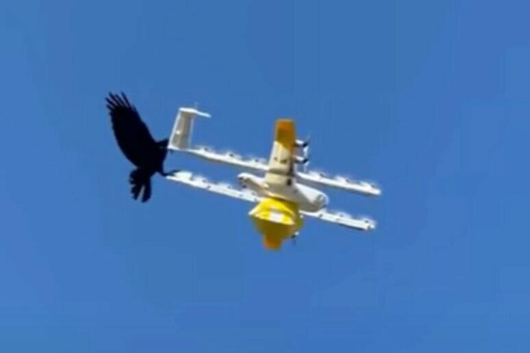 dron pták video souboj Austrálie Wing Alphabet