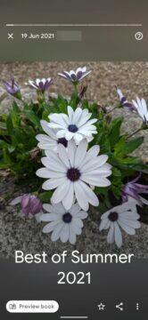 Fotky Google kolekce Best Of Summer 2021 květiny