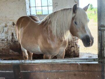 Vivo X60 Pro zoom fotoaparát kůň